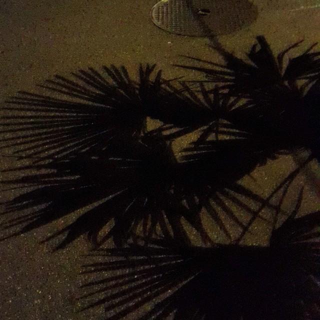 PALM TREES IN BASEL#isawsomethingnice #walking #palmtrees #basel #shadow #light